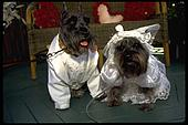 dogwedding2