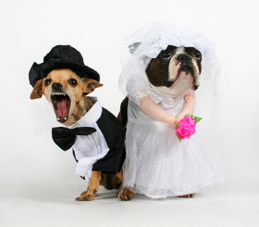 Muttrimony; What your dog can teach you about a successful marriage