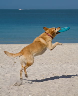 Proper Care and Grooming Tips for the Dog that loves to Swim (at the beach or pool)