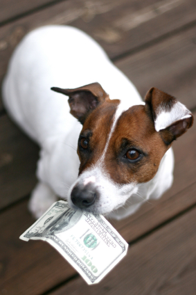 The Pet Industry May Not be Recession-Proof After All!