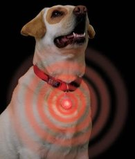 lighteddogcollar