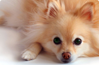 Are those flea and tick products safe?