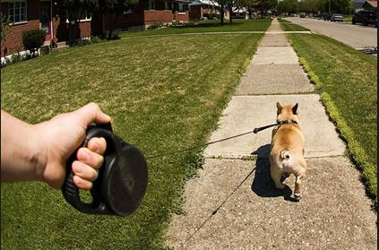 dog walking on retractable leash