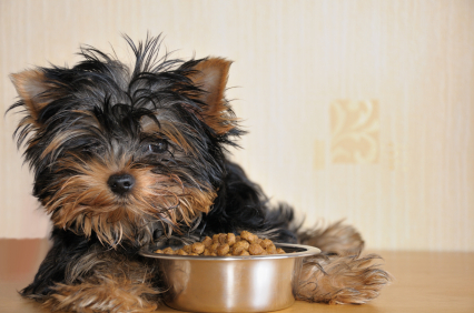 How Proper Nutrition Can Assist Dogs With Heart Disease and Diabetes