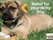 relief for itchy dog