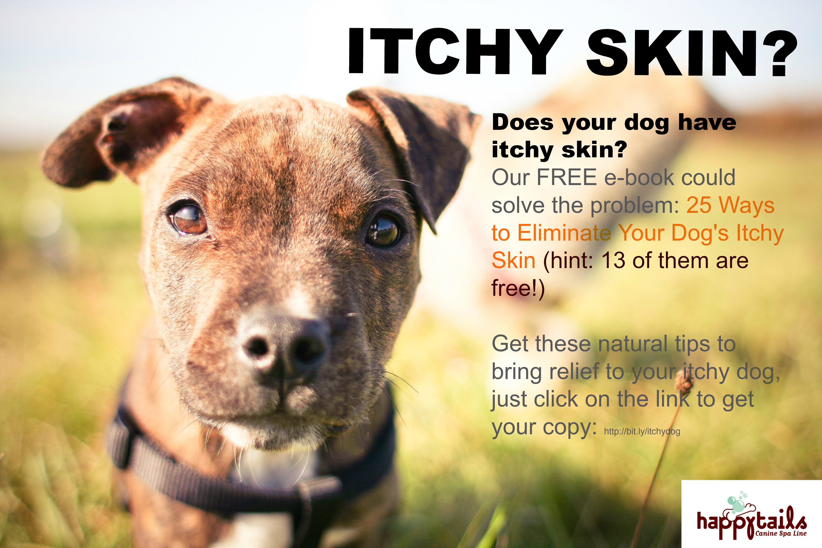 itchy skin ebook box large