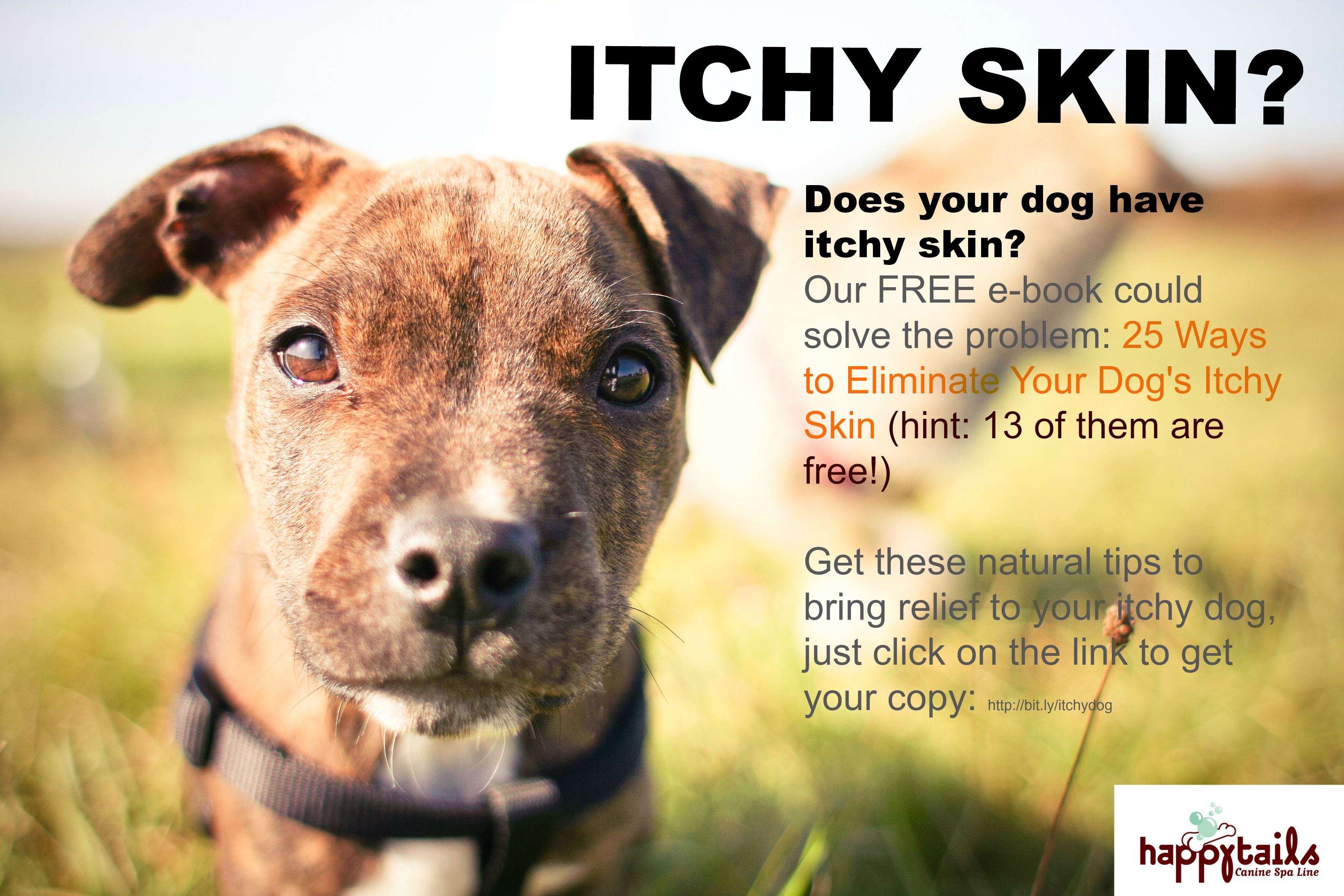itchy skin ebook box