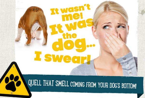 Gassy Dog? Learn how to quell that smell!