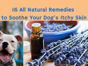 16 All Natural Remedies to Soothe Your (1)