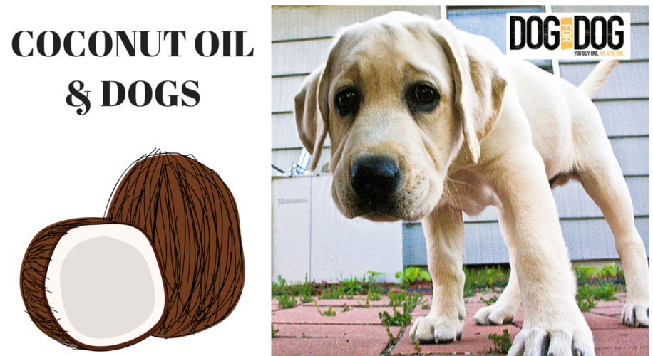 Coconut Oil is Excellent for Dogs. Check out DOGSBUTTER by DOG for DOG