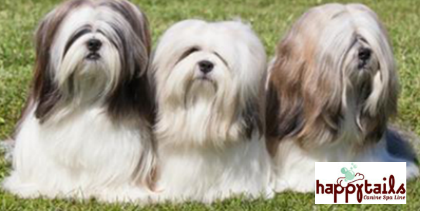 Can Dogs Have Hair Instead Of Fur