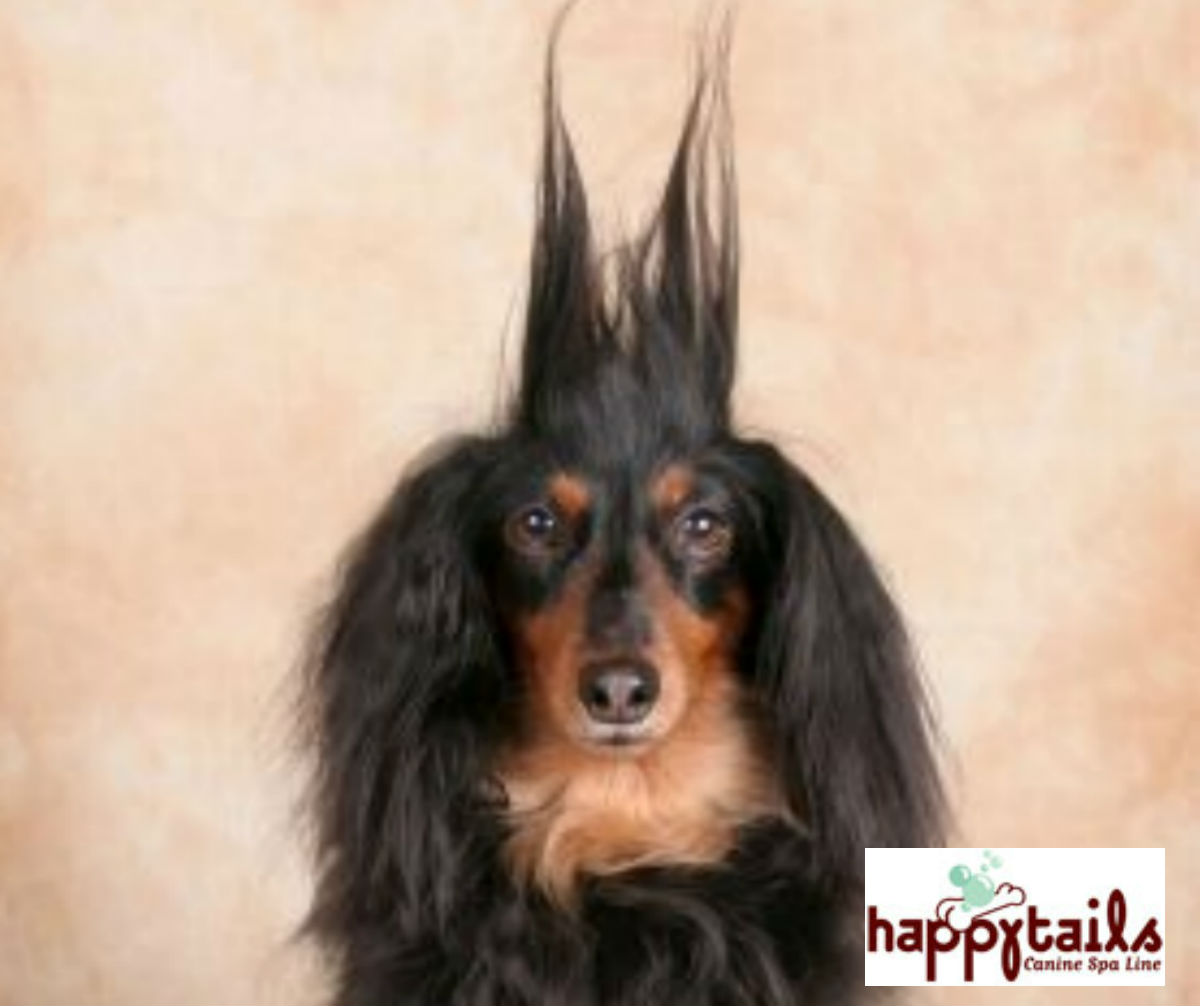 Long Haired Dog Tips How To Save Hundreds At The Groomers Ruff Ideas